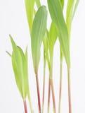 Élevage vert de texture Photos libres de droits
