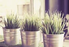 Élevage vert frais d'herbe du blé trois Photo stock