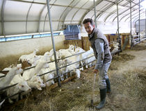 Éleveur d'homme avec des chèvres dans le fonctionnement de grange Image libre de droits