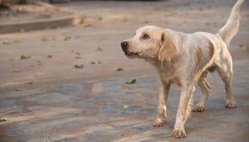 Éleveur de chiens Thaïlande Images libres de droits