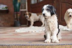 Éleveur de chiens Thaïlande Photos libres de droits