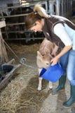 Éleveur donnant la nourriture aux animaux de ferme Photographie stock libre de droits
