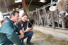 Éleveur et vétérinaire dans la grange Photo stock