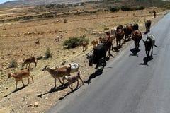 Éleveurs de bétail en Ethiopie Photo stock