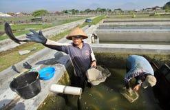 Éleveurs de poisson d'eau douce Photos libres de droits
