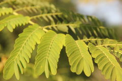 Élevez juste les feuilles tendres Photos libres de droits
