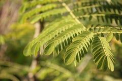 Élevez juste les feuilles tendres Photos stock