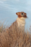 Élevez le chien de moutons sur une voie herbeuse de dune de sable Photographie stock