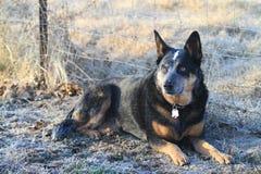 Élevez le chien par la barrière avec le collier et les étiquettes Photos stock