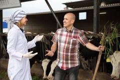 Élevez le vétérinaire et le travailleur professionnel se tenant près de traire le troupeau à b Image libre de droits