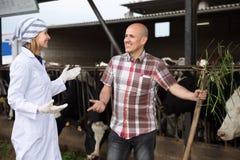 Élevez le vétérinaire et le travailleur professionnel se tenant près de traire le troupeau à b Photographie stock libre de droits