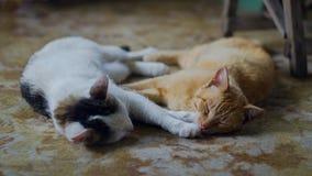 Élevez les chats dormant sur le porche de ferme se reposant après la proie de nuit photos libres de droits