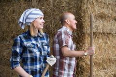 Élevez les employés rassemblant l'herbe avec des fourches dans la barre de bétail Images libres de droits