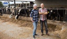 Élevez les employés travaillant avec traire le troupeau dans la grange de bétail Photographie stock