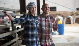Élevez les employés travaillant avec traire le troupeau dans la grange de bétail Image stock