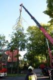 Élimination de l'arbre cassé Images libres de droits