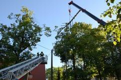 Élimination de l'arbre cassé Images stock