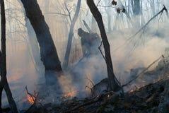 Élimination de l'incendie de forêt 25 Photographie stock