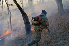 Élimination de l'incendie de forêt 27 Photos stock