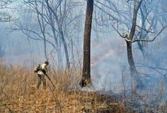 Élimination de l'incendie de forêt 51 Photos libres de droits