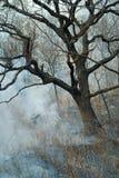 Élimination de l'incendie de forêt 52 Photos libres de droits