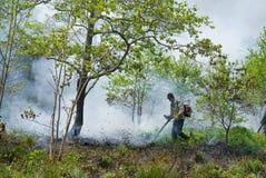 Élimination de l'incendie de forêt 54 Images libres de droits