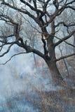 Élimination de l'incendie de forêt 60 Image libre de droits