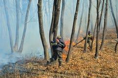 Élimination de l'incendie de forêt 61 Photographie stock libre de droits