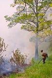 Élimination de l'incendie de forêt 76 Image stock