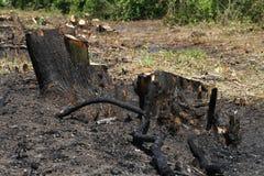 Élimination de la forêt Photos libres de droits