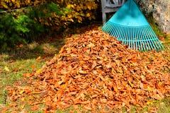 Élimination des feuilles d'automne de feuillage Photos libres de droits