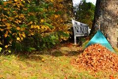 Élimination des feuilles d'automne de feuillage Photo libre de droits