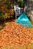 Élimination des feuilles d'automne de feuillage Images stock