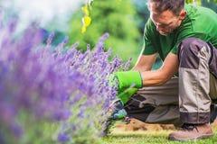 Élimination des mauvaises herbes de jardin Image libre de droits