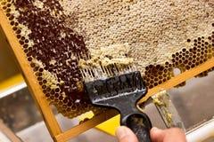 Élimination des nids d'abeilles Photo stock