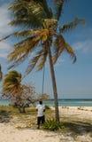 Élimination des noix de coco d'un arbre, les Bahamas Image stock