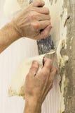 Élimination du vieux papier peint dans la chambre Images stock