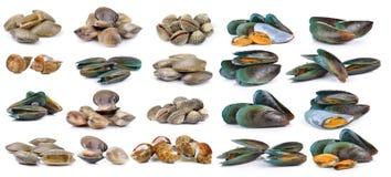 Émaillez la coquille de venus, mollusques et crustacés de palourde, palourde de ressac, moule, repérée Images libres de droits