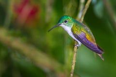 Émeraude andine Photos libres de droits