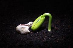 Émergence de jeune plante Images libres de droits