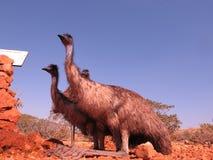 Émeus, Australie Images libres de droits