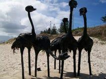 Émeus sur la plage Image stock