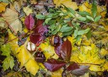 Émeute de couleurs d'automne Caucase du nord, Russie Photographie stock libre de droits