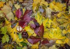 Émeute de couleurs d'automne Caucase du nord, Russie Photos libres de droits