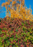 Émeute de couleurs d'automne Caucase du nord, Russie Images stock