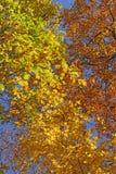 Émeute de couleurs en automne Image stock