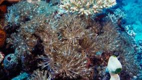 Émeute de la vie sous-marine Diversité de forme, couleurs fabuleuses des coraux mous et école colorée des poissons La Papouasie N photos libres de droits