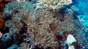 Émeute de la vie sous-marine Diversité de forme, couleurs fabuleuses des coraux mous et école colorée des poissons La Papouasie N photographie stock