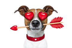 Émoticône ou Emoji fou dans l'amour Images libres de droits