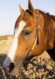 Émotion de cheval Photographie stock libre de droits